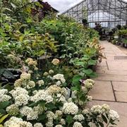garden centre leicestershire - 3