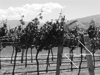 your own vineyard - 1