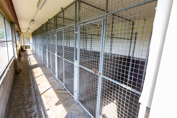 profitable boarding kennels superb - 14