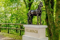 stunning equestrian livery training - 3