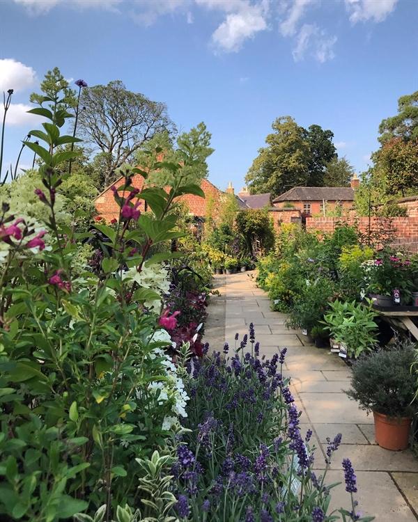garden centre leicestershire - 6